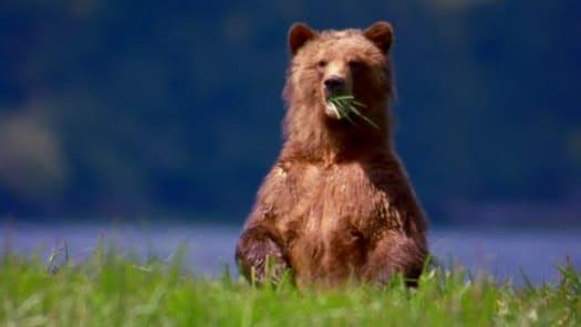 Watch Man V Animal TV Serial Episode 3 - Ultimate Bear Full Episode on  Hotstar