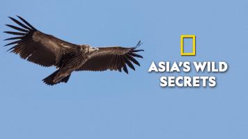 Asia's Wild Secrets