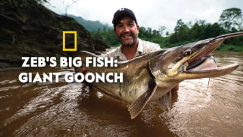 Zeb's Big Fish: Giant Goonch