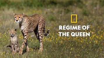Regime of the Queen