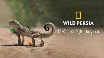 Wild Persia