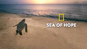 Sea of Hope: America's Underwater Treasures