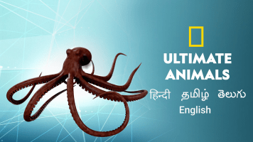 Ultimate Animals