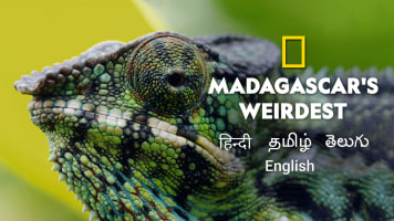 Madagascar's Weirdest