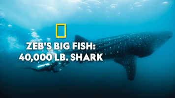 Zeb's Big Fish: 40,000 Lb. Shark
