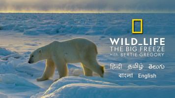 Wild_Life: The Big Freeze With Bertie Gregory
