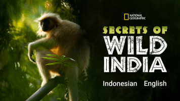 The Secrets of Wild India