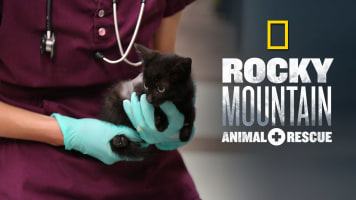 Rocky Mountain: Animal Rescue