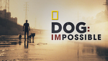 Dog Impossible