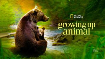 Growing Up Animal