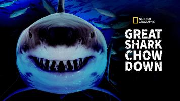 Great Shark Chow Down
