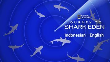Journey to Shark Eden