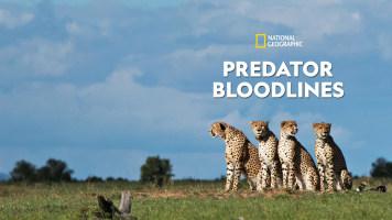 Predator Bloodlines