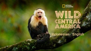 Wild Central America