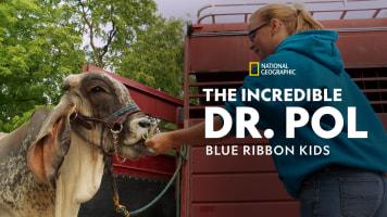 The Incredible Dr. Pol: Blue Ribbon Kids