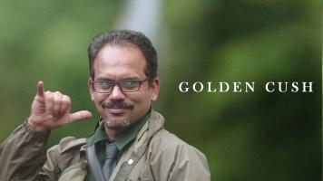 Golden Cush