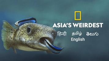 Asia's Weirdest