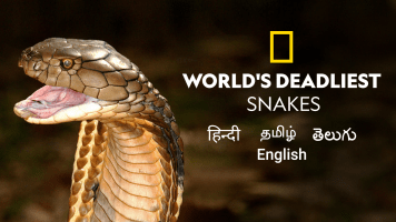 World's Deadliest Snakes