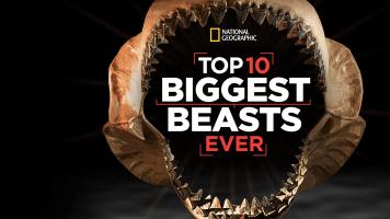 Top 10 Biggest Beasts Ever